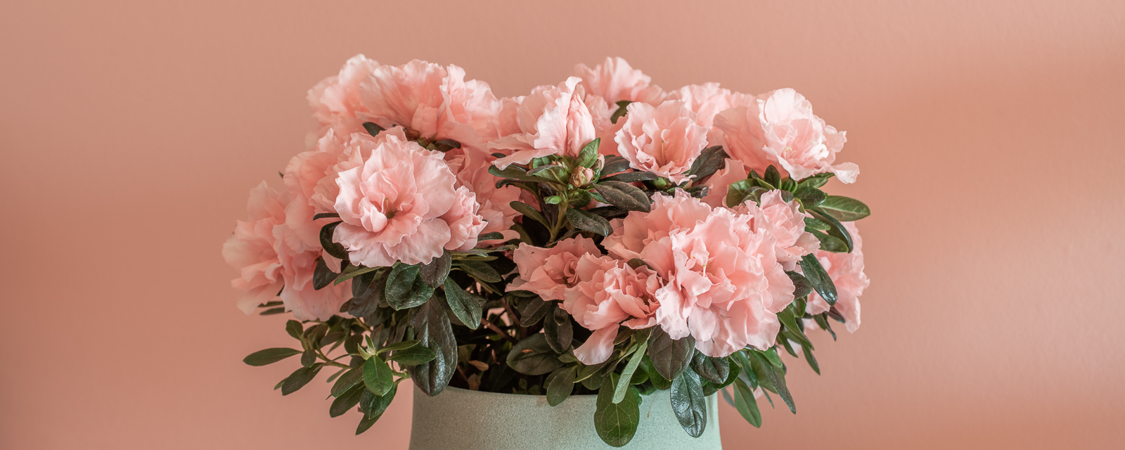 Why choose a bouquet when you can give something to last longer?
